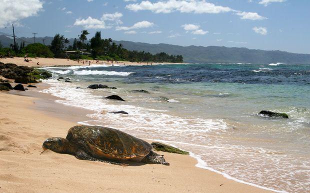 Turtle Beach Oahu Hawaii Met Our Friends Here Secluded
