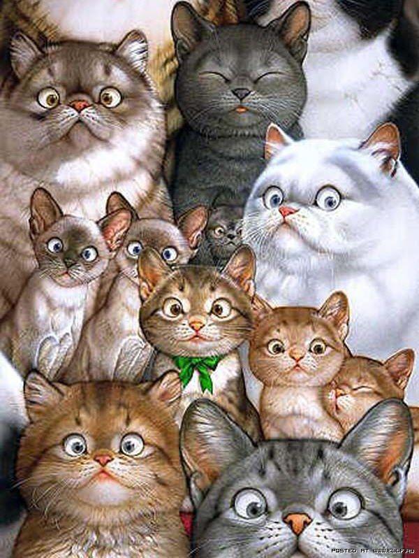 Смешные картинки животных много, вечер анимации красивые