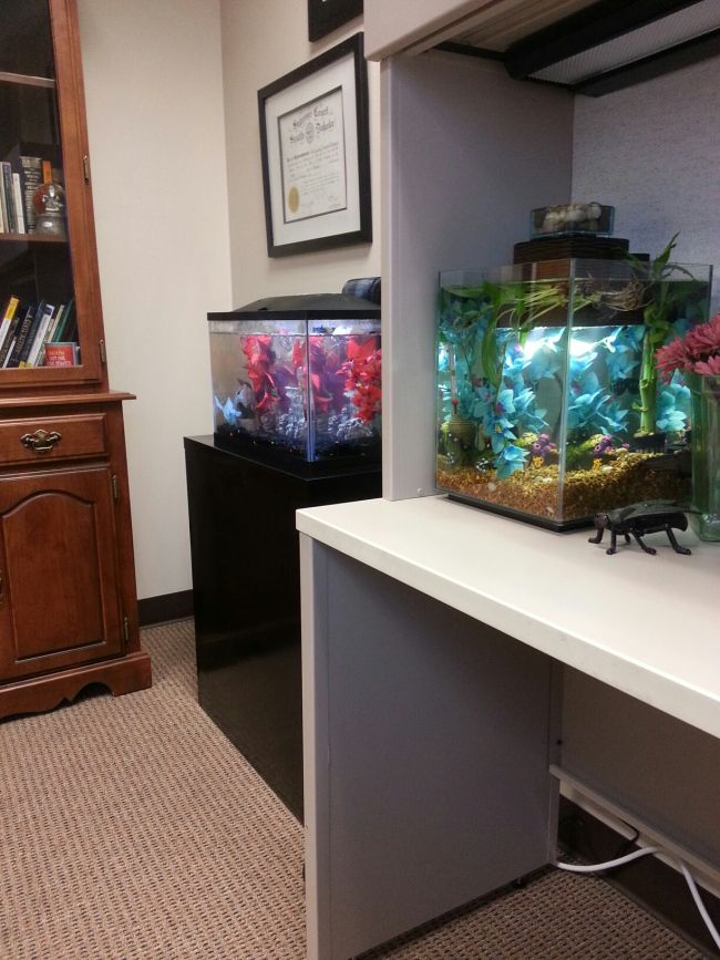 Crispy Clear Clean Beautiful Office Betta Tank Cool Fish