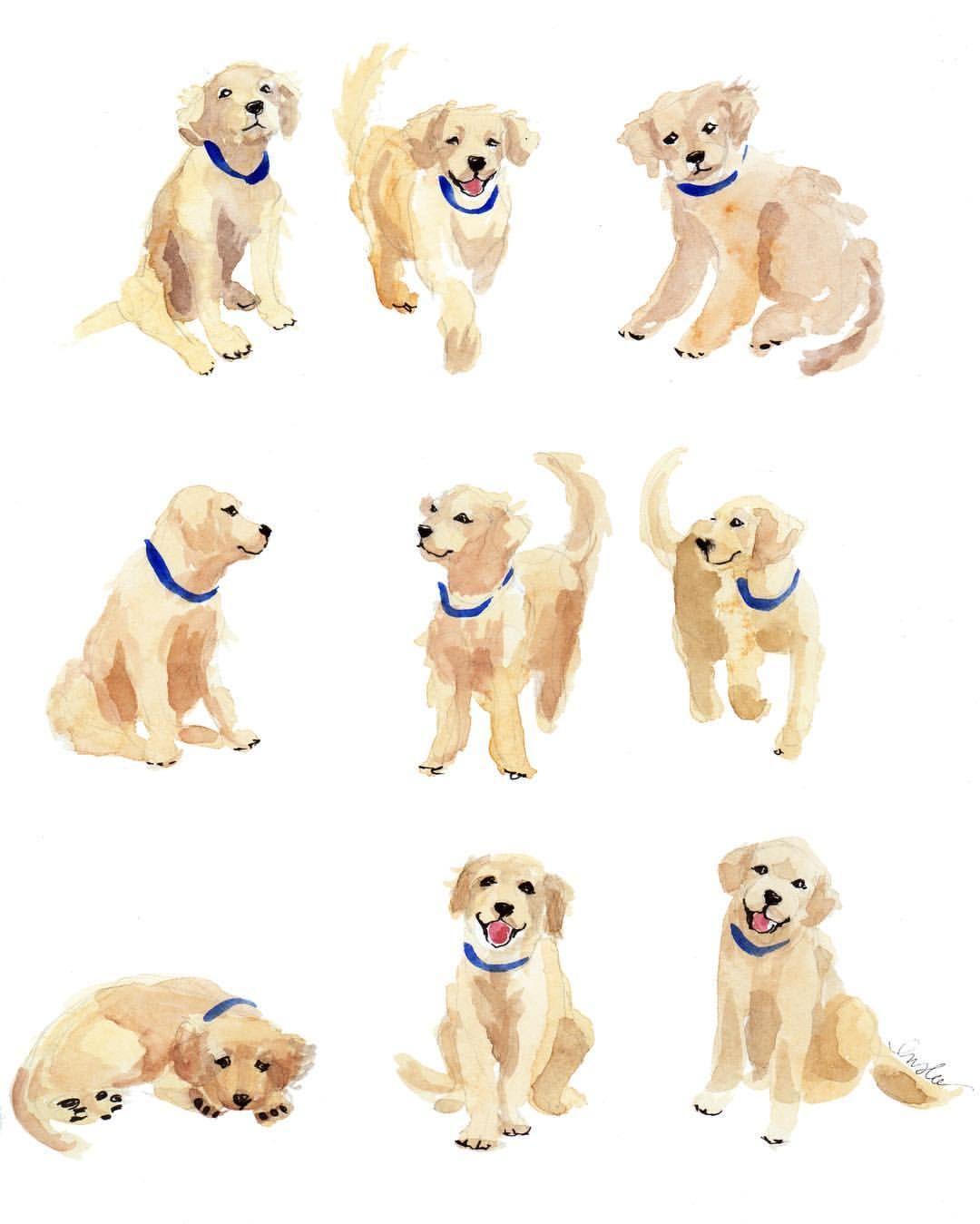 Puppies Inslee Haynes Dog Illustration Golden Retriever