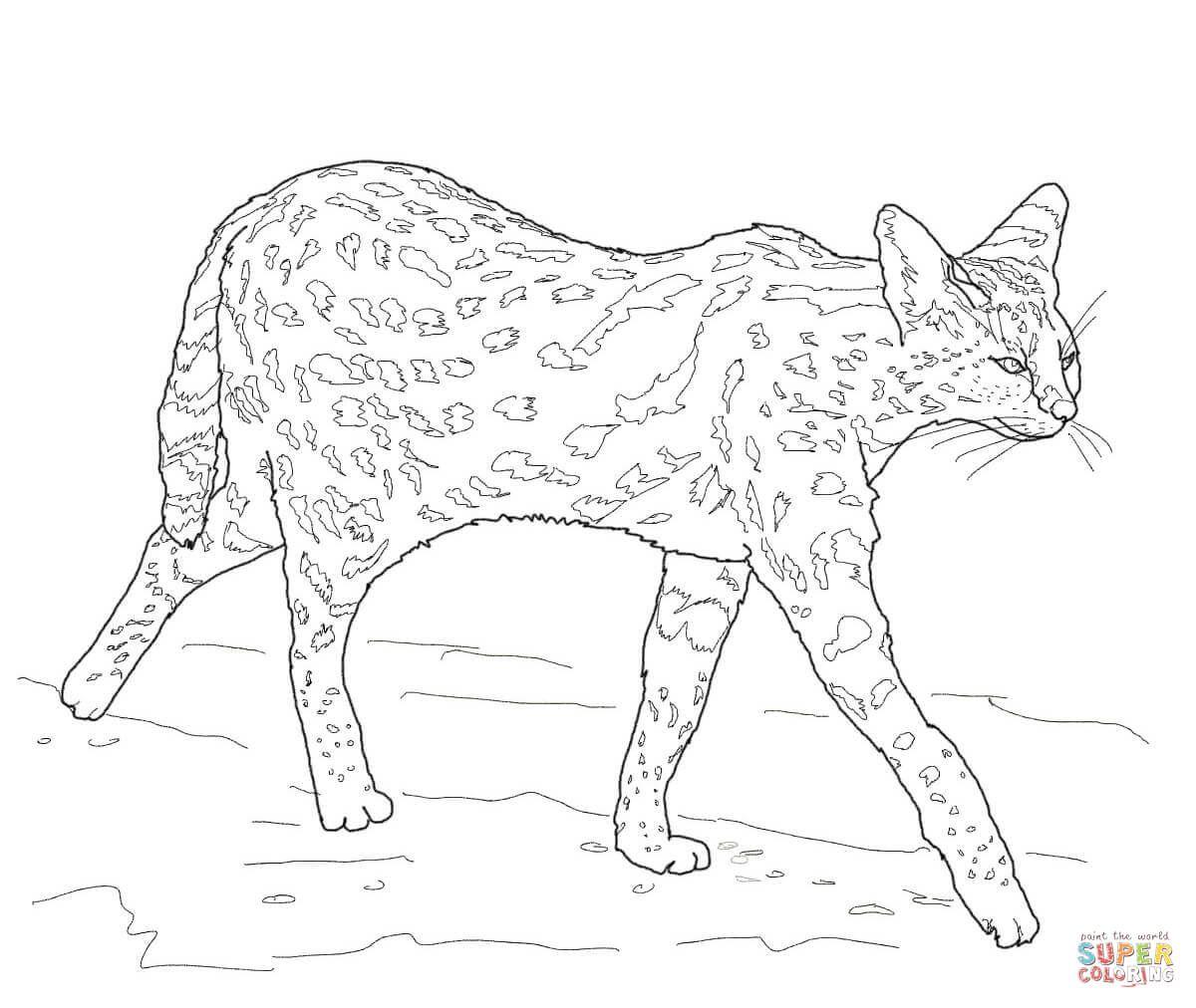 Serval Ausmalbilder Ausmalbilder Serval Ausmalbilder Ausmalen Serval [ 1012 x 1200 Pixel ]