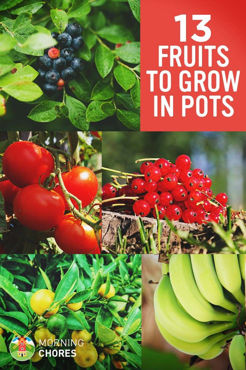 13 Best Fruits And Berries You Can Easily Grow In A 400 x 300