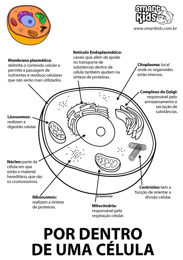 Colorir Desenho Principais Estruturas da Célula | Ciências ...