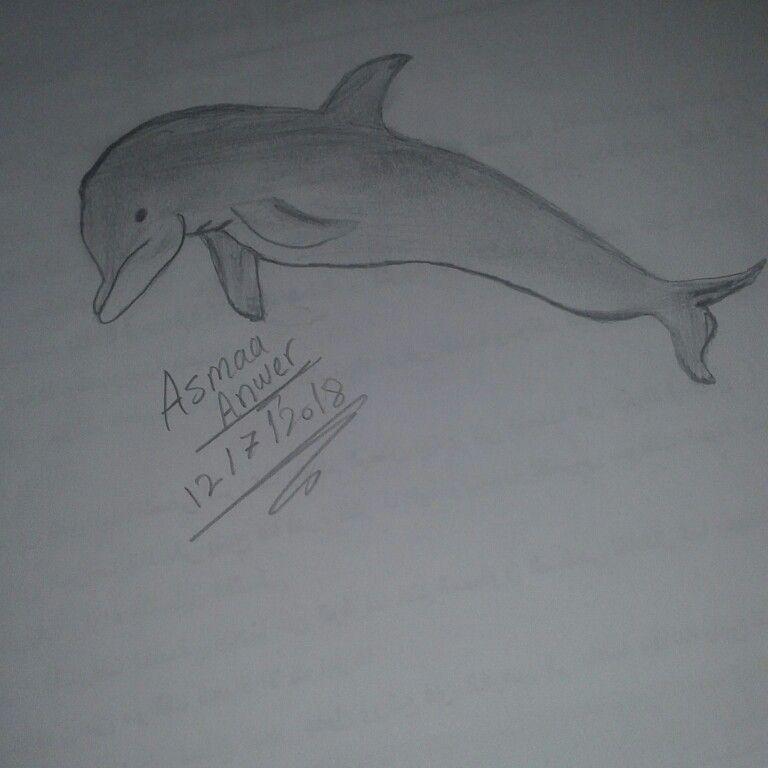 رسم دولفين Art Female Sketch