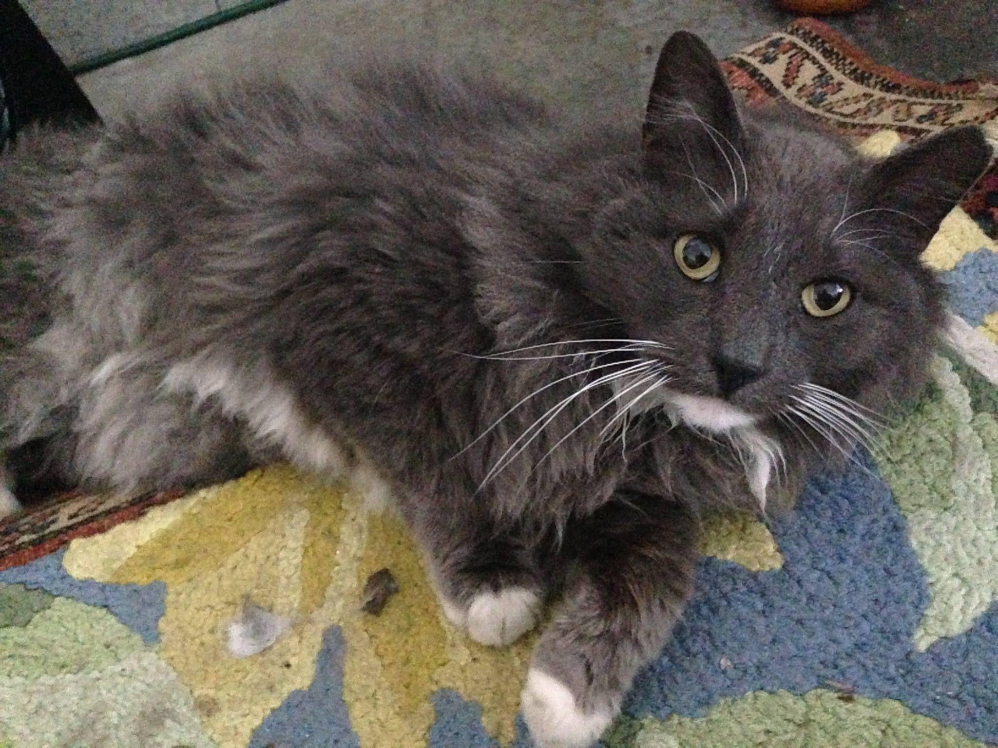 Marissa Mayer Photos Of Ct Lost Pets Facebook Found Cat Losing A Pet Pets