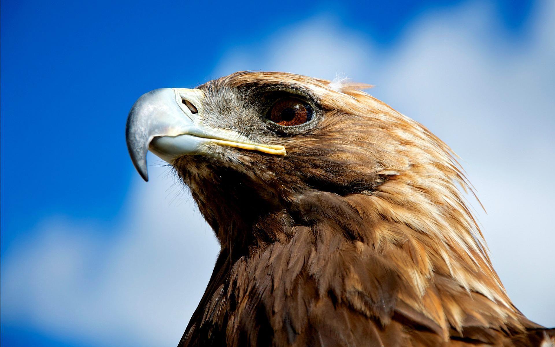Best Eagles Wallpaper Free wallpaper download 1920×1200 Eagle ...