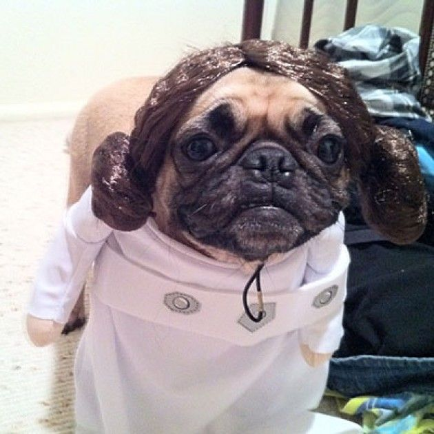 Star Wars Dog Leia Pet Parade Best Dog Costumes