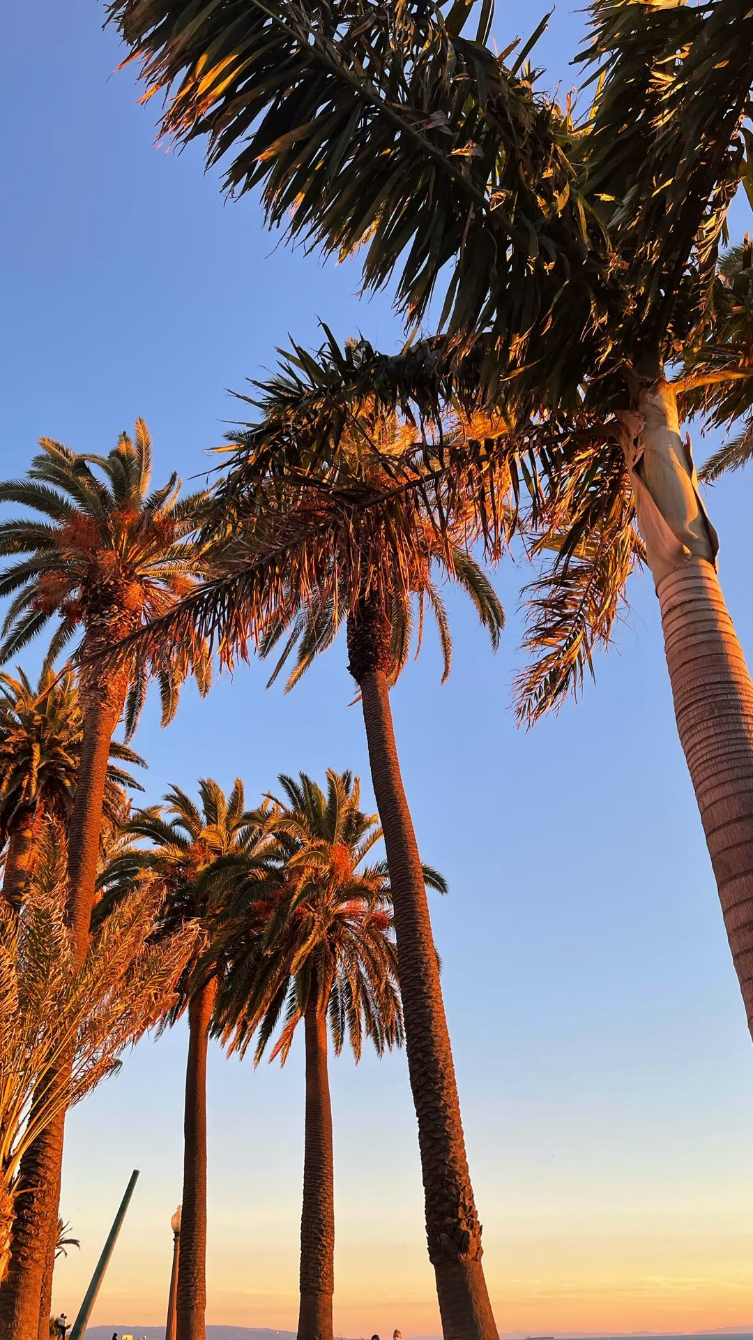The Best of Los Angeles - Sunsets, Beach, Blue Skies, Palm Trees