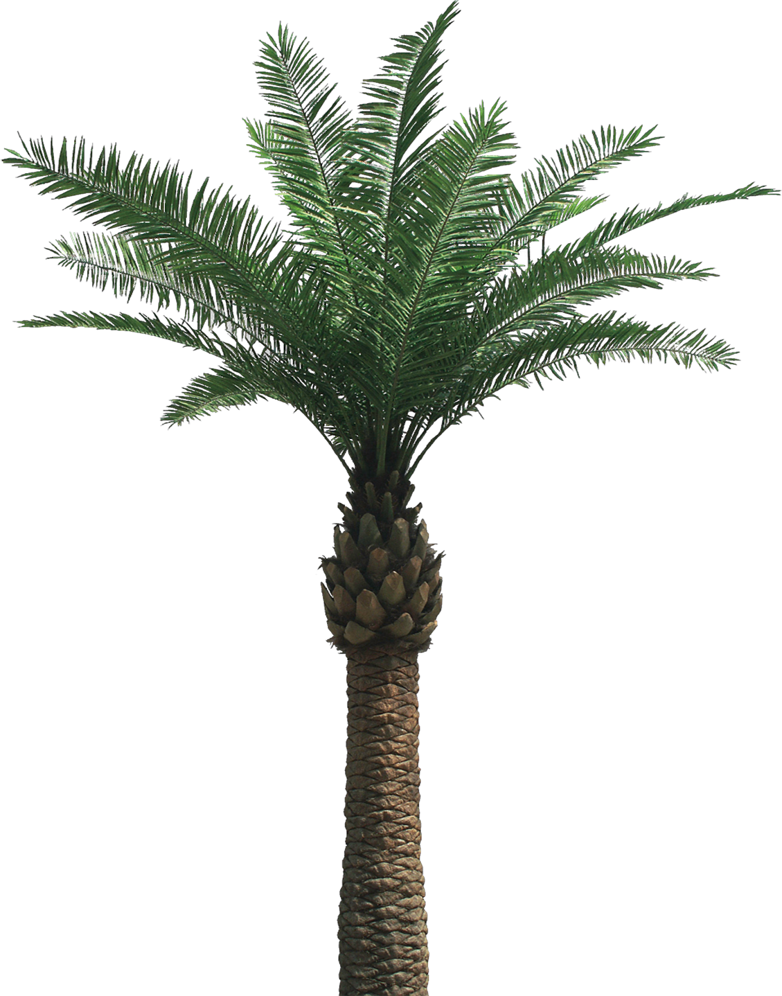 Artificial Palm Tree And Cocotree Like Real Palm Tree
