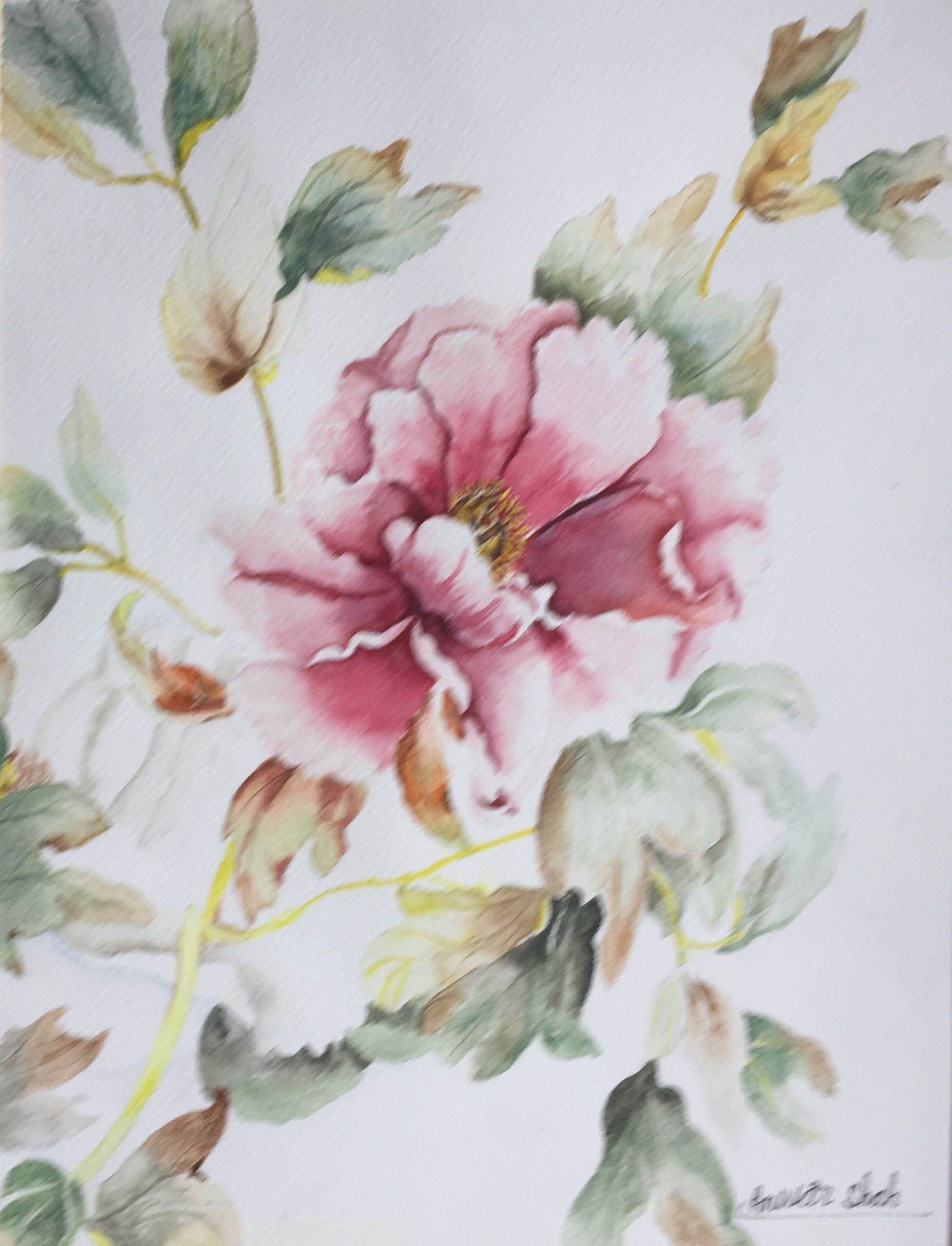 Watercolour On Paper Peony Japanese Flowers By A Shah Flowers