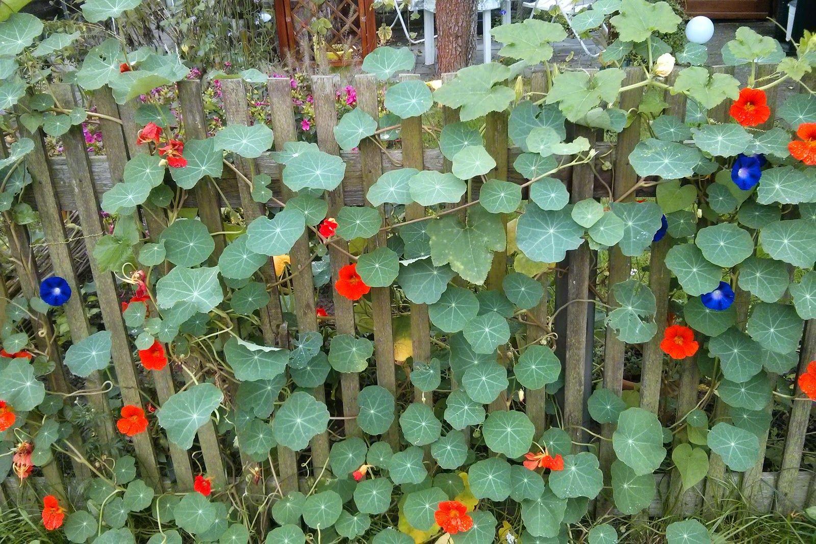 Garten Im September mydimana garten im september garten ideen garten