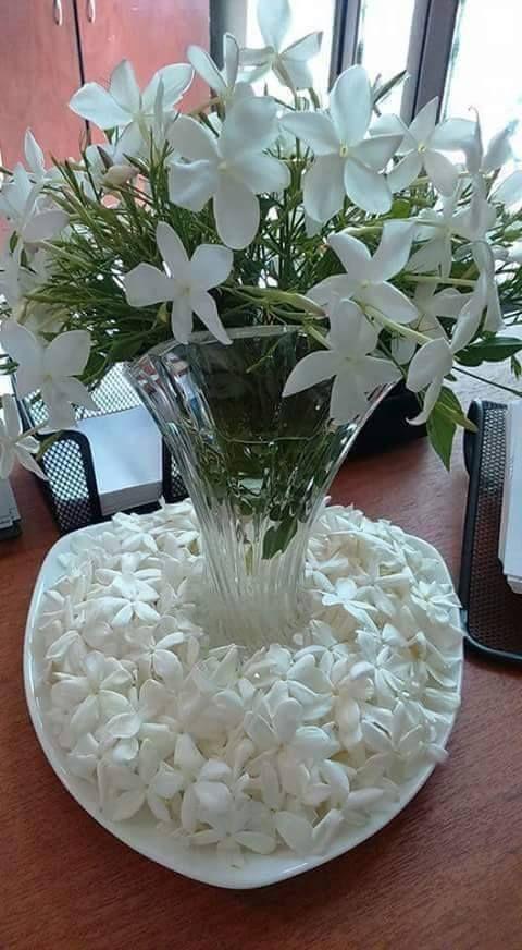 ياسمين شامي Beautiful Rose Flowers Beautiful Flowers Wallpapers Beautiful Flower Arrangements