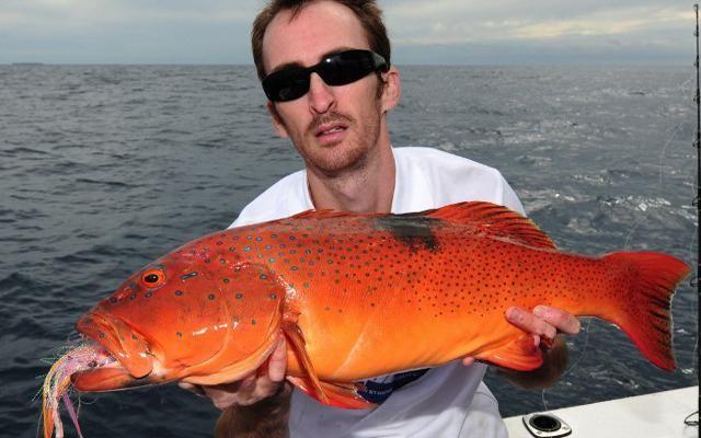 http://www.alivenotdead.com/findacharter/Fishing-Charters ...
