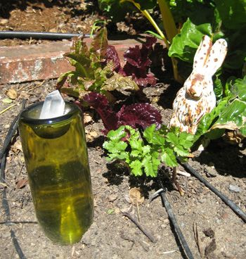 how to keep cats out of the garden. Keeping Cats Out Of Our Gardens Exclusively At Cat Faeries How To Keep The Garden L