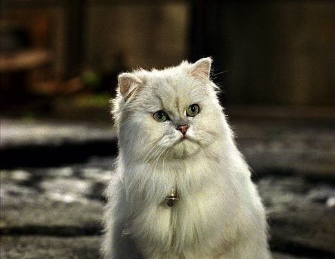 Snowbell Stuart little, Cat person, Funny character