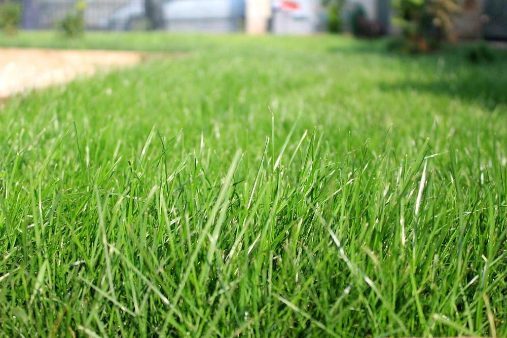 How to Plant a Lawn from Seeds Growing grass from seed