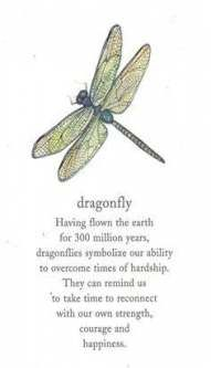 Pin by Maryse Mullin on Quotes/sayings in 2020 | Dragonfly symbolism