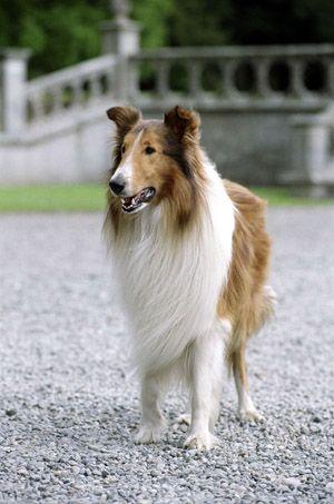 Pin On Animal Movie Stars