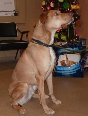 Joey 35168 Urgent The Animal Shelter Society Inc In