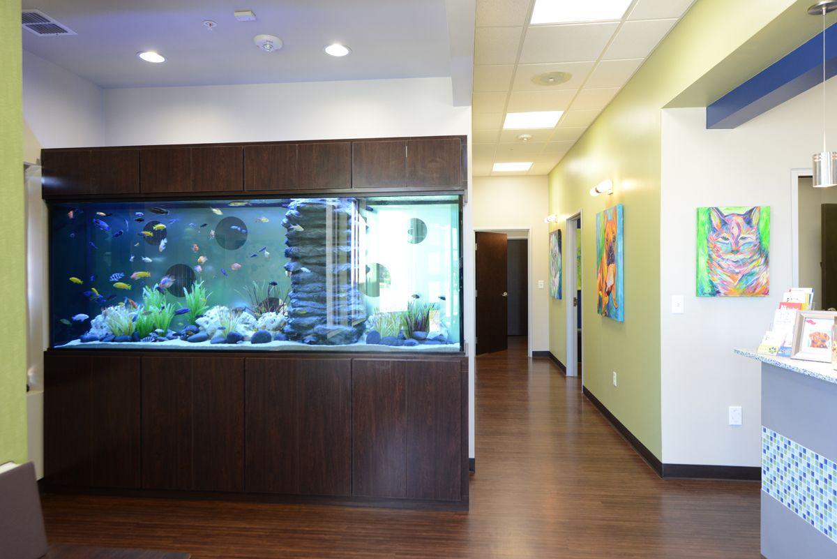 Freshwater aquarium fish dallas -