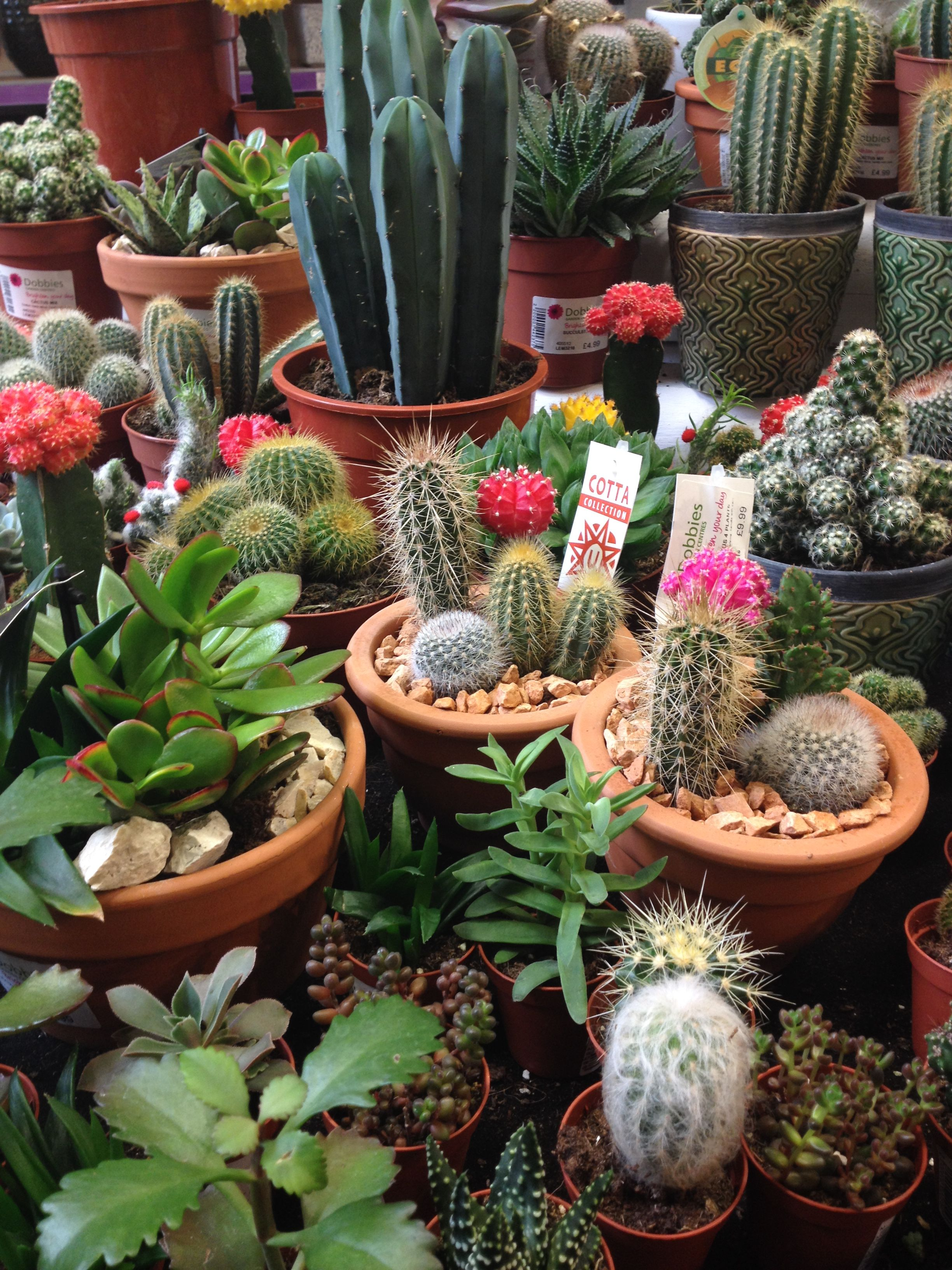 lots of cacti in dobbies a while back   Flowers   Pinterest   Cactus ...