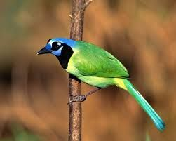 wonderful pictures of birds - Google Search
