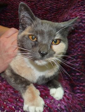 Adopt Winter Petco On Cats Pets Animals