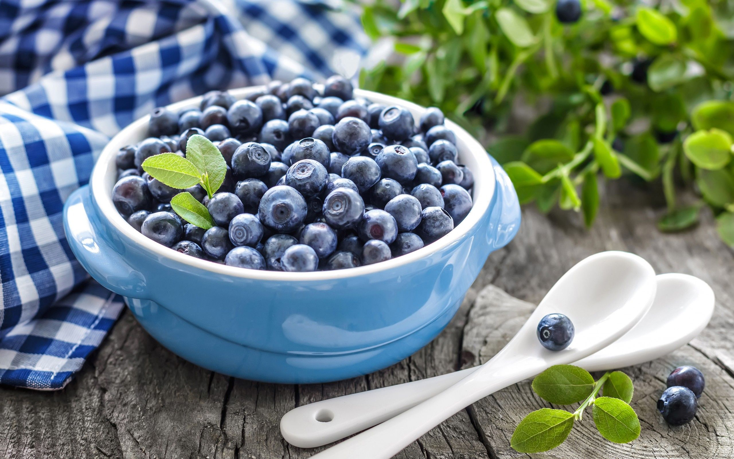 Download Hd Wallpapers Of Blueberries Nature Fresh Food