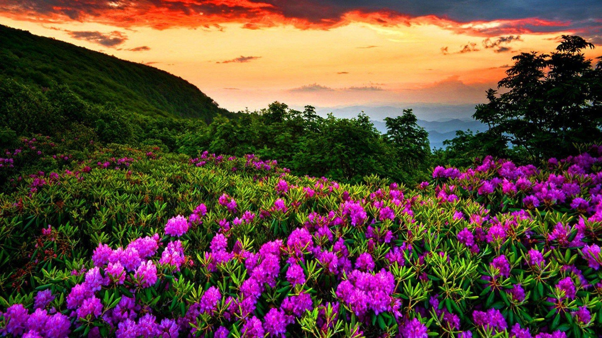Beautiful Nature Spring Pictures Full Hd S Izobrazheniyami Naturalnyj Fotografii Prirody Pejzazhi