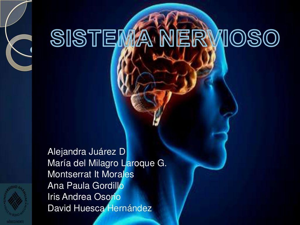 Anatomía y fisiología de sistema nervioso by Montserrat It via ...