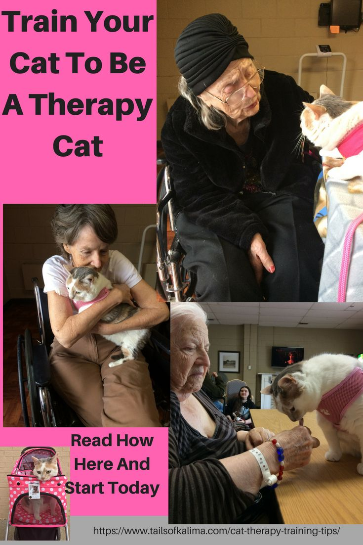 Cat Therapy Training Tips Everything You Need To Know