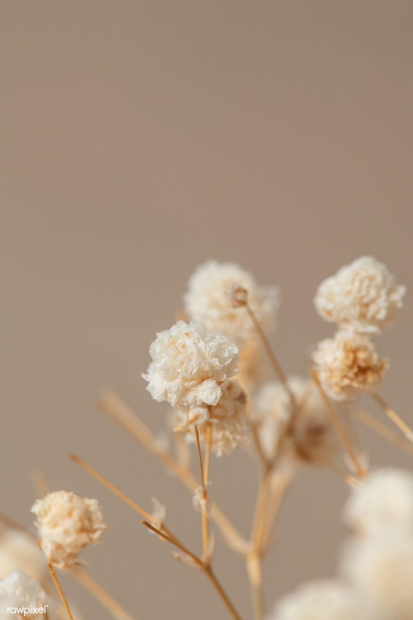 Dried gypsophila flowers macro shot | premium image by rawpixel.com / Teddy Rawpixel
