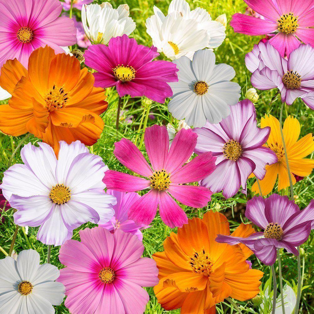 Pin On 2018 Flower Planning