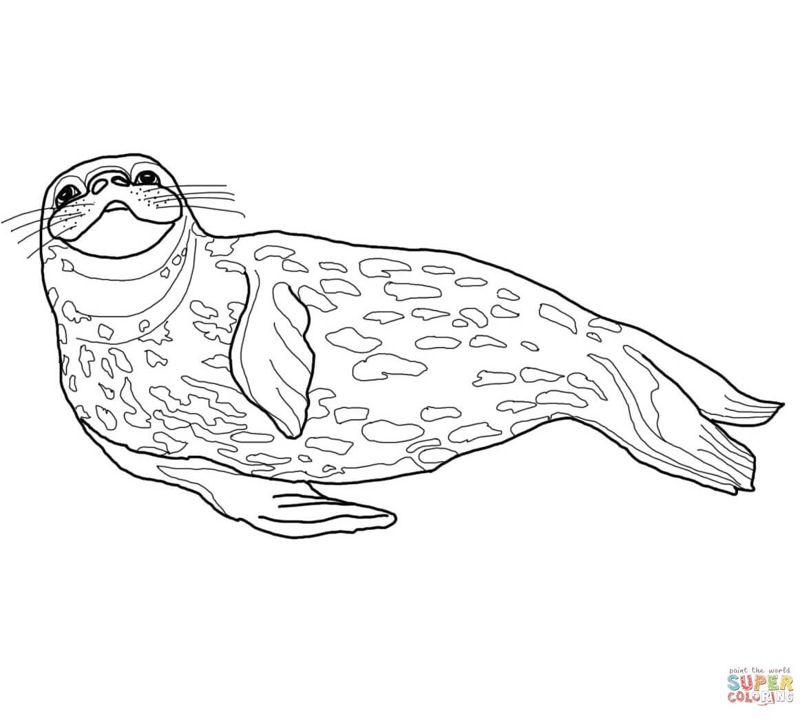 weddell seal  sea animals drawings coloring pages