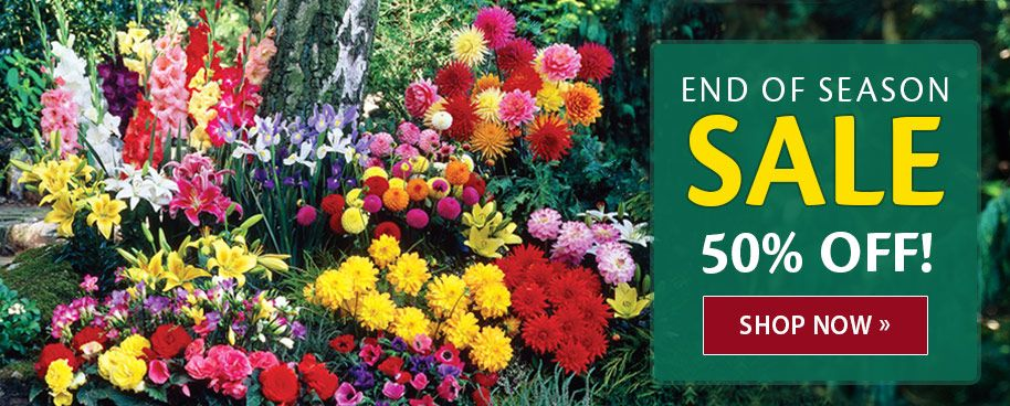 K Van Bourgonn Sons Whole Flower Bulbs And Perennials
