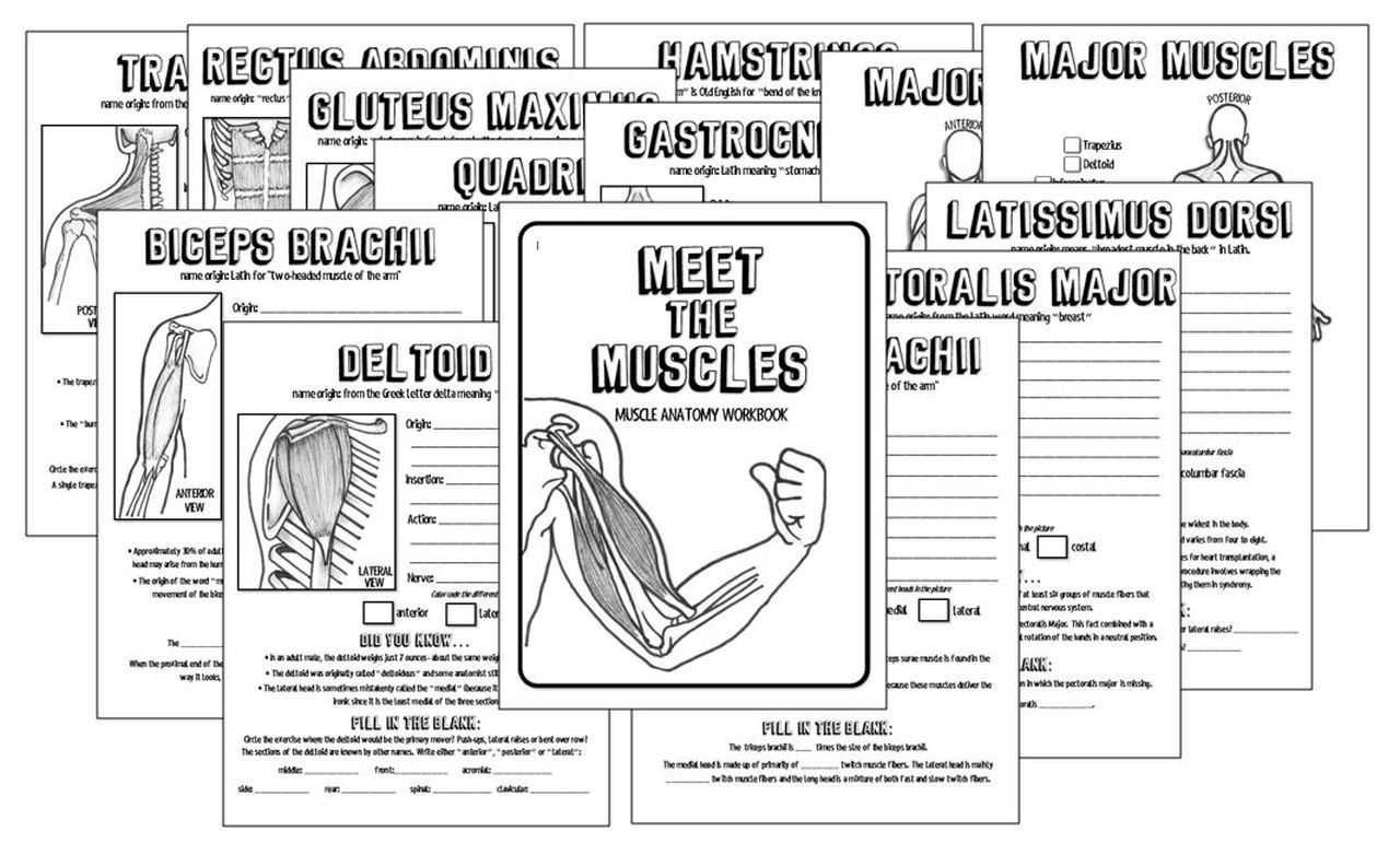Meet The Muscles 14 Page Muscular System Anatomy Workbook