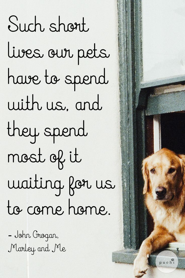 Dog Quotes We Love There S Nothing Sweeter Than Coming Home To Your Waiting Pup Such Short Lives Our Pets Have Cute Dog Quotes Dog Quotes Love Dog Quotes