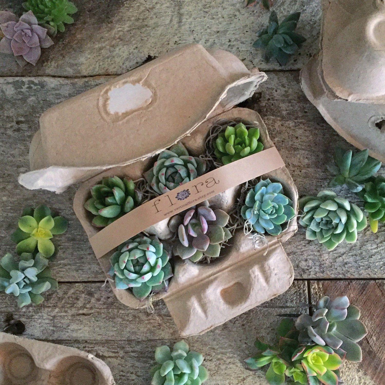Succulent Cutting Starter Kit (2900 Usd) By Verticalflora