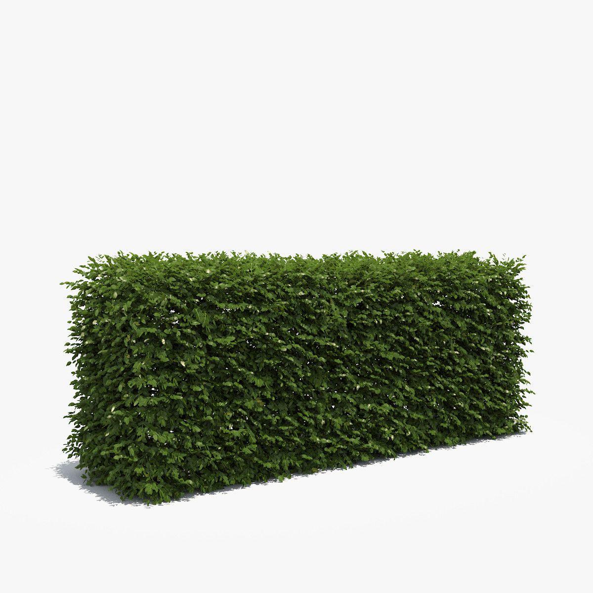 3d Model Cm Boxwood Hedge Box Hedges Trees To Plant Landscape Design