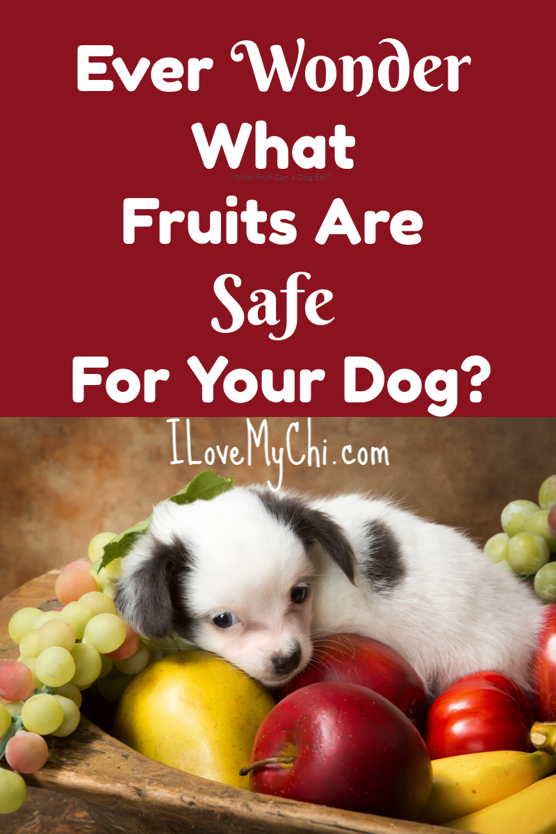 What Fruit Can A Dog Eat With Images Can Dogs Eat Fruits For Dogs