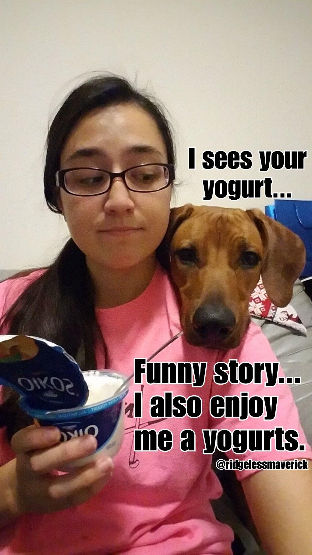 Dog Food Meme Food Memes Dog Memes Memes
