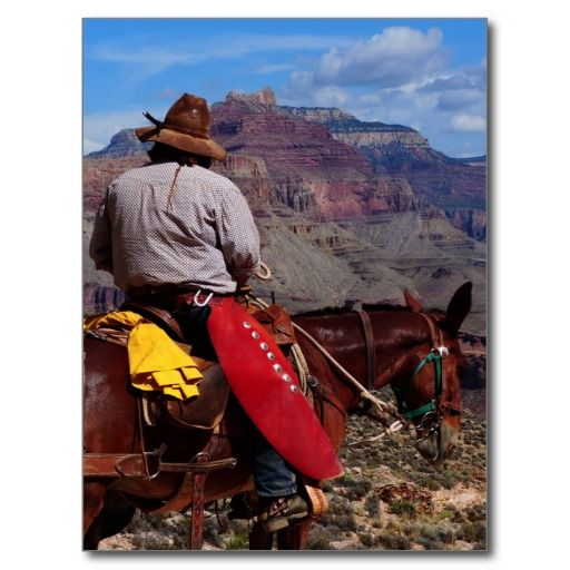 Grand Canyon Mule Wrangler Postcard  Grand Canyon Tourism And Park