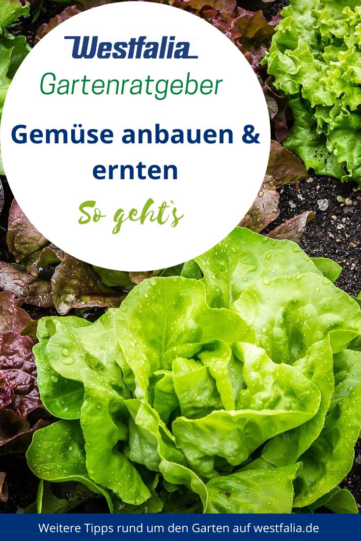 Gemuse Anbauen Und Ernten Im Eigenen Nutzgarten Bei Westfalia Versand Deutschland Gemuse Anbauen Garten Gemuse
