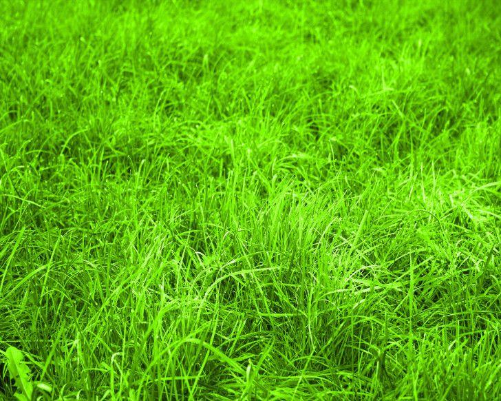 Nature Greener Pastures Hd Wallpaper Nature Wallpapers Bermuda Grass Grass Wallpaper Grass Care