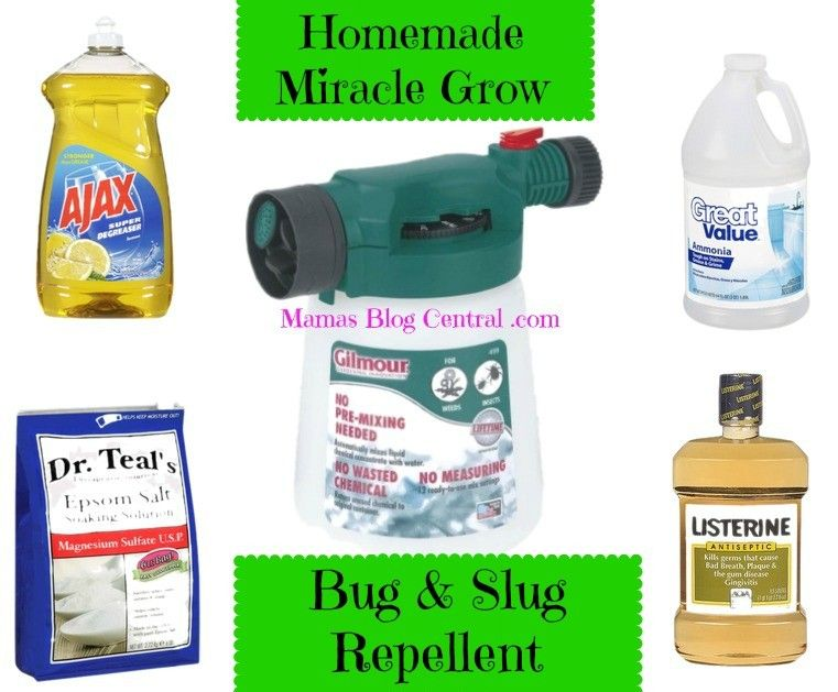 Natural bug repellent mamasblogcentral natural bug - Natural insect repellent for gardens ...