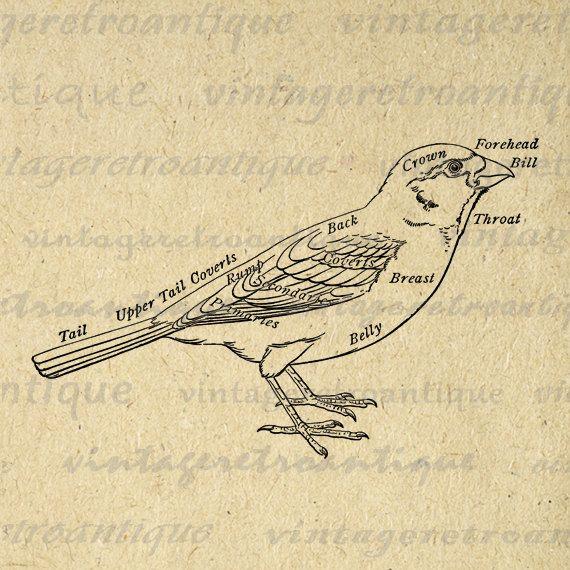 Vintage Bird Diagram - Product Wiring Diagrams •