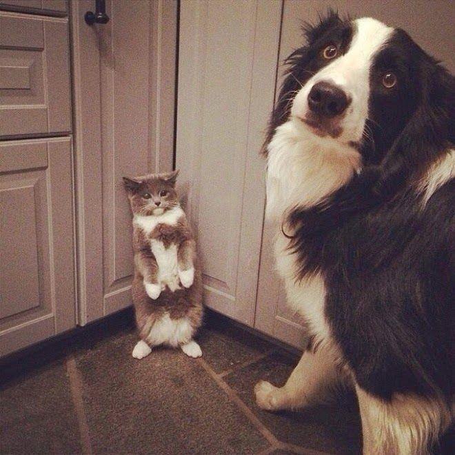 Fotos Graciosas De Perros Haciendo Travesuras Todo Mascotas Memes Perros Fotos De Perros Imagenes De Perros