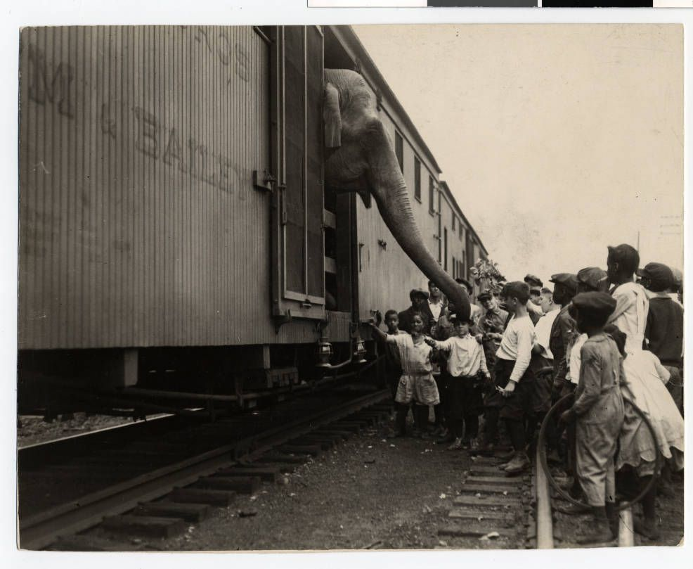barnum and bailey circus train duluth mn 1920 s the circus came