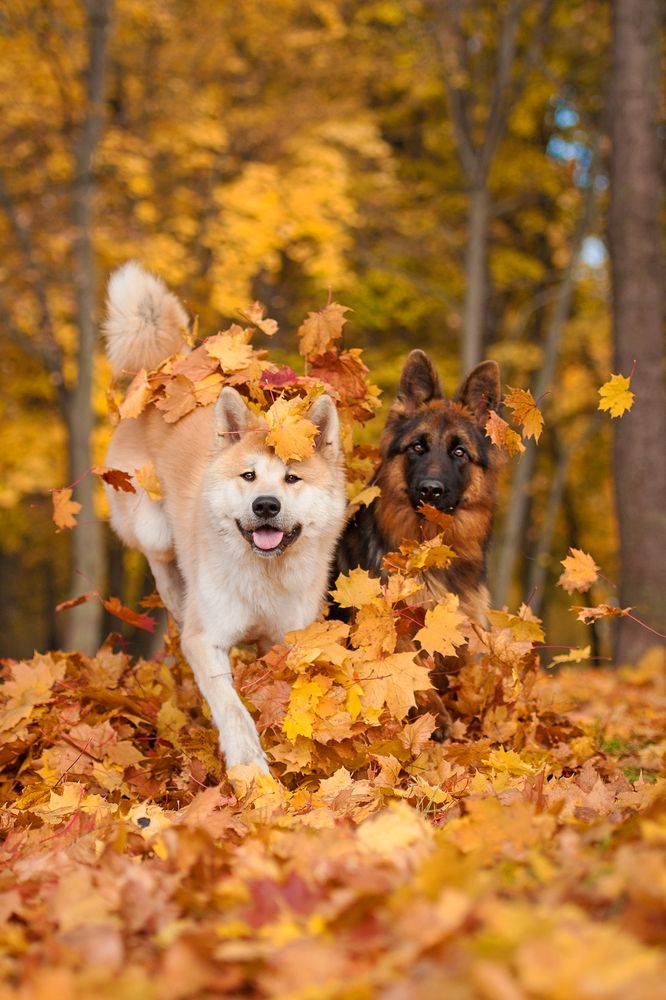 App Helps You Find A Pal For Your Pup Fall Dog Dog Photoshoot