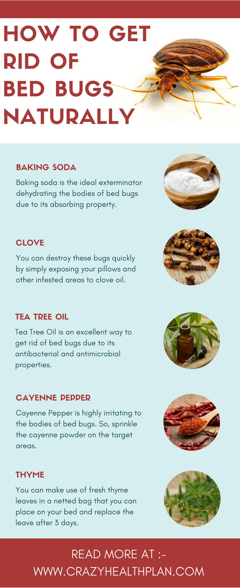 Pin By Zavida Begum On Natural Cures Rid Of Bed Bugs Bed Bug Bites Bed Bugs